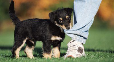 comprar mascotas en la web